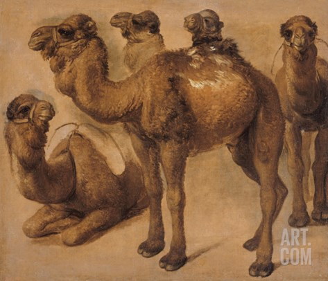 Cinq chameaux Stretched Canvas Print