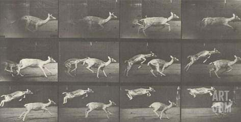 Biches, course et sauts Stretched Canvas Print
