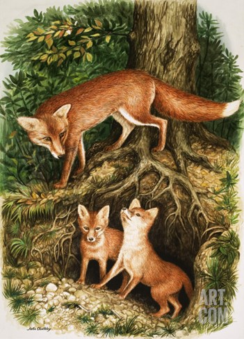 The Fox Family, Illustration from 'Once Upon a Time', 1971 Stretched Canvas Print