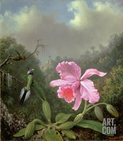 Still Life with an Orchid and a Pair of Hummingbirds, C.1890S Stretched Canvas Print
