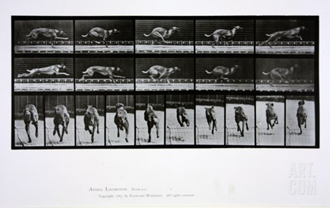 Greyhound Running, Plate 708 from 'Animal Locomotion', 1887 Stretched Canvas Print