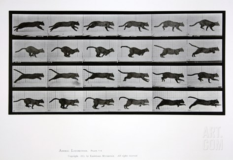 Cat Running, Plate 720 from 'Animal Locomotion', 1887 Stretched Canvas Print