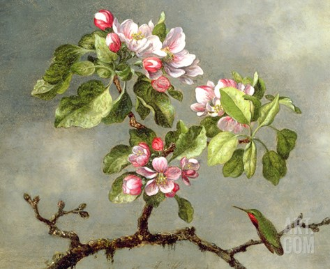 Apple Blossoms and a Hummingbird, 1875 Stretched Canvas Print