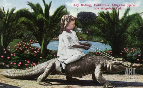 Los Angeles, California - Girl Riding Alligator at the Farm Stretched Canvas Print