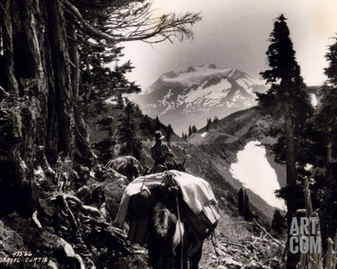 Hoh-Solduc Trail, Olympic Peninsula, Undated Stretched Canvas Print