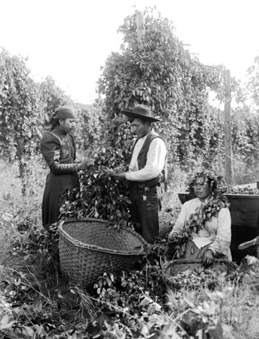 Native American Hop Pickers, 1909 Stretched Canvas Print
