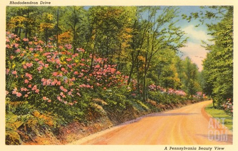 Rhododendron Drive, Pennsylvania Stretched Canvas Print
