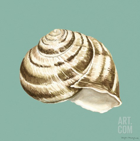Shell on Aqua I Stretched Canvas Print
