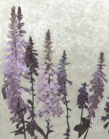 Non-Embellished Foxgloves II Stretched Canvas Print