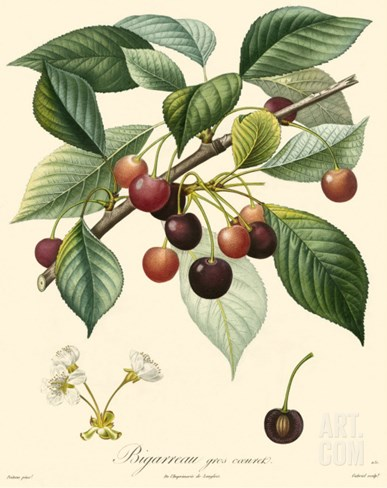 Bessa Cherries Stretched Canvas Print