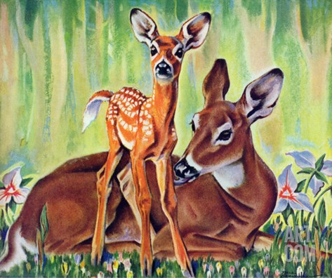 """Doe and Fawn in Forest,"" June 1, 1940 Stretched Canvas Print"