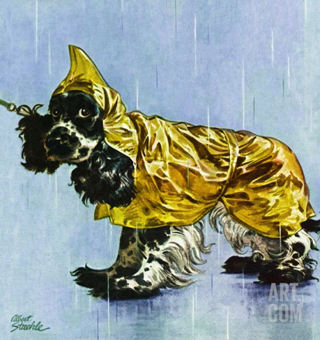 """Butch in Raingear,"" April 2, 1949 Stretched Canvas Print"