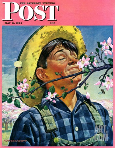 """Apple Blossoms,"" Saturday Evening Post Cover, May 6, 1944 Stretched Canvas Print"