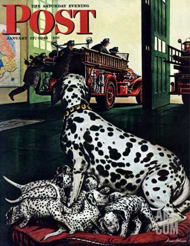 """Dalmatian and Pups,"" Saturday Evening Post Cover, January 13, 1945 Stretched Canvas Print"