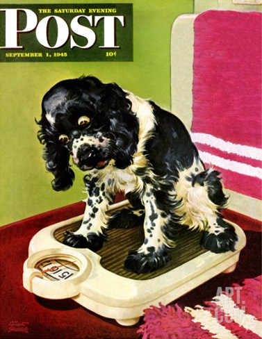 """Butch Weighs In,"" Saturday Evening Post Cover, September 1, 1945 Stretched Canvas Print"