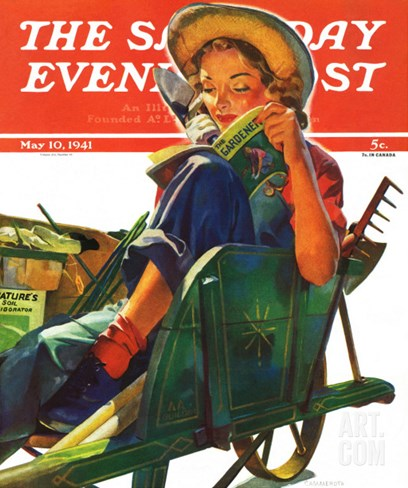 """Gardener in Wheelbarrow,"" Saturday Evening Post Cover, May 10, 1941 Stretched Canvas Print"
