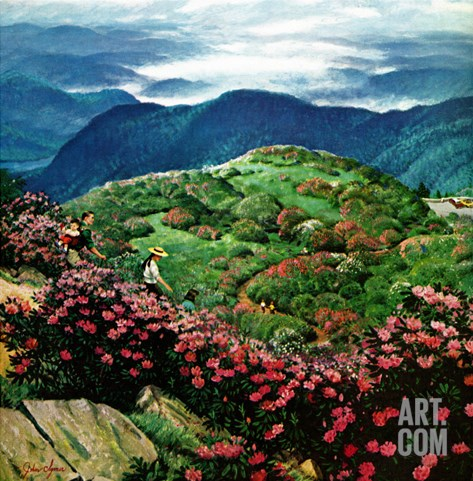 """Appalachian Rhododendrons,"" May 27, 1961 Stretched Canvas Print"