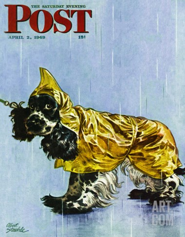 """Butch in Raingear,"" Saturday Evening Post Cover, April 2, 1949 Stretched Canvas Print"
