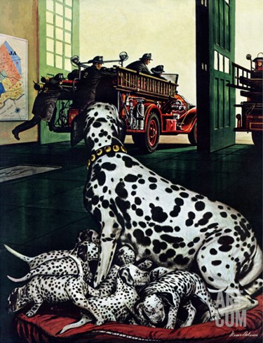 """Dalmatian and Pups,"" January 13, 1945 Stretched Canvas Print"