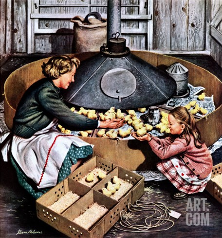 """Chicks in Incubator,"" March 5, 1949 Stretched Canvas Print"