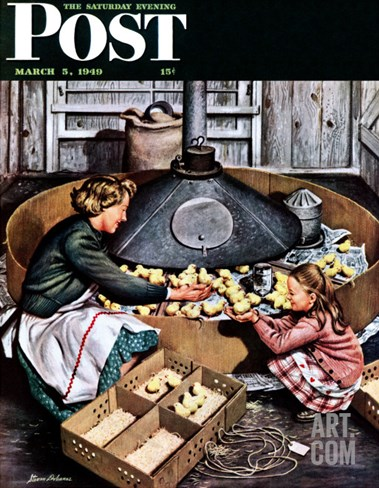 """Chicks in Incubator,"" Saturday Evening Post Cover, March 5, 1949 Stretched Canvas Print"