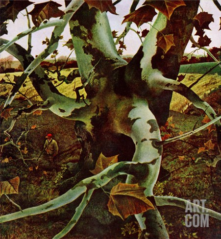 """Sycamore Tree and Hunter,"" October 16, 1943 Stretched Canvas Print"