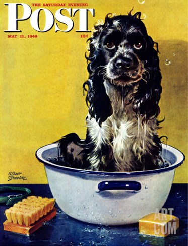 """Butch Gets a Bath,"" Saturday Evening Post Cover, May 11, 1946 Stretched Canvas Print"
