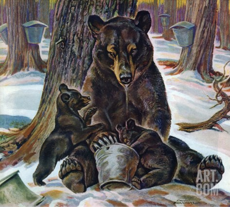 """Bears Eating Maple Syrup,"" March 28, 1942 Stretched Canvas Print"