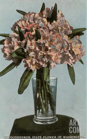 Rhododendrons in Vase, State Flower of Washington Stretched Canvas Print