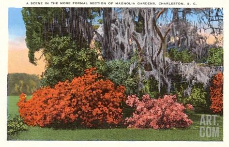 Magnolia Gardens, Charleston, South Carolina Stretched Canvas Print