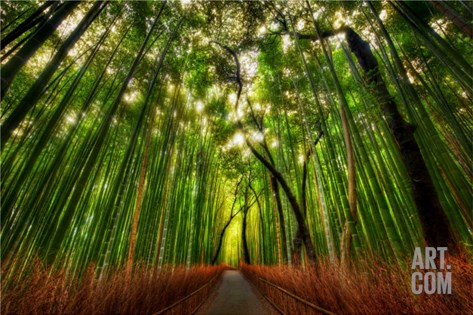 The Bamboo Forest Stretched Canvas Print