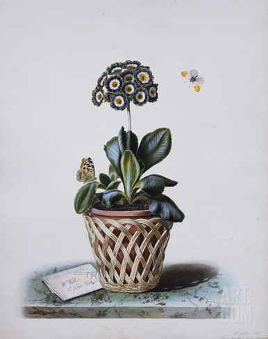 An Auricula in a Pot in a Basket Cachepot, with a Painted Lady and Orange Tip Butterflies Stretched Canvas Print