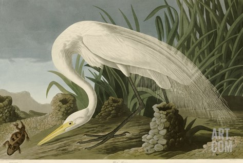 White Heron Stretched Canvas Print