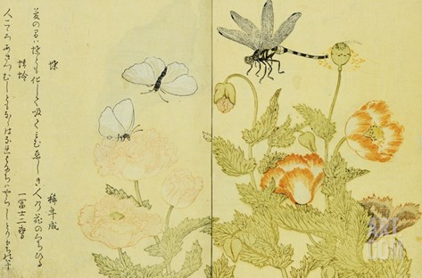 Illustration from A Picture Book of Selected Insects Stretched Canvas Print