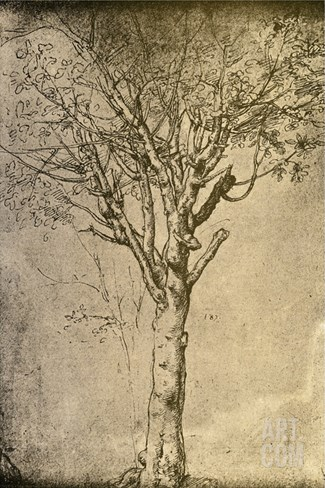 Drawing a Tree by Leonardo da Vinci Stretched Canvas Print