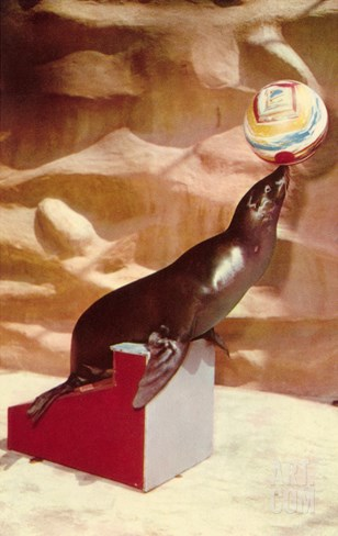 Performing Seal, Retro Stretched Canvas Print