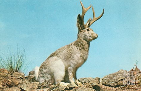 Jackalope Stretched Canvas Print