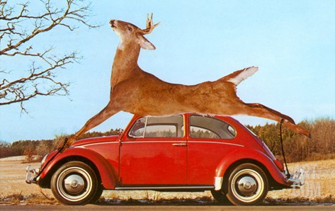 Giant Deer Tied on Volkswagen Stretched Canvas Print