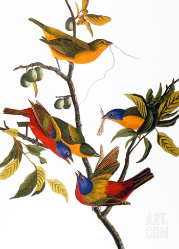Audubon: Bunting, 1827 Stretched Canvas Print