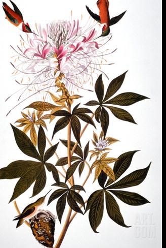 Audubon: Hummingbird Stretched Canvas Print