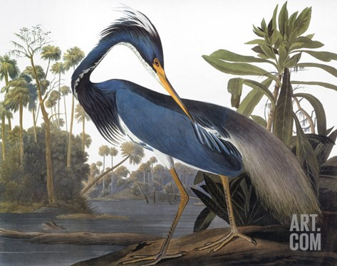 Audubon: Heron, 1827 Stretched Canvas Print