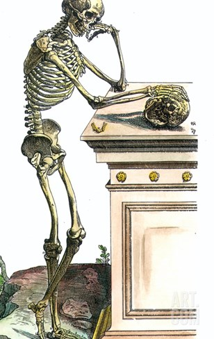 Vesalius: Skeleton, 1543 Stretched Canvas Print