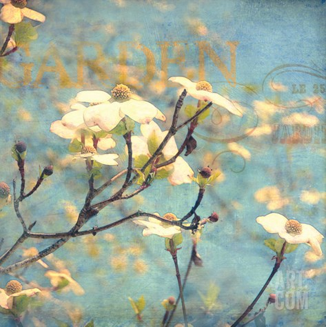 Dogwood II - Blossoming Tree Stretched Canvas Print