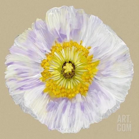 Poppy Blossom IV Stretched Canvas Print
