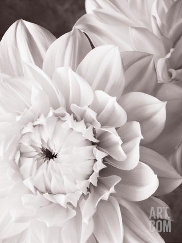 Black and White Dahlias I Stretched Canvas Print