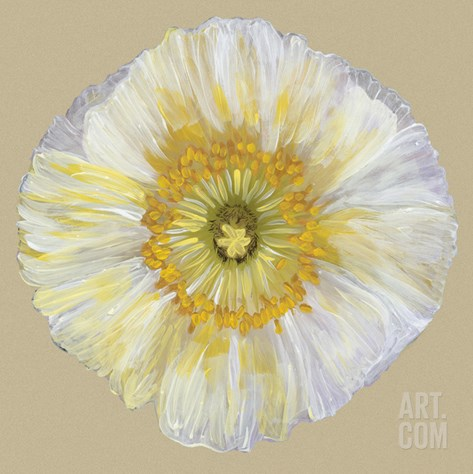 Poppy Blossom II Stretched Canvas Print