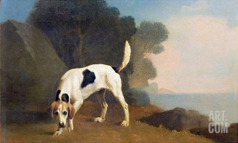 Foxhound on the Scent, C.1760 (Oil on Paper Laid on Board) Stretched Canvas Print