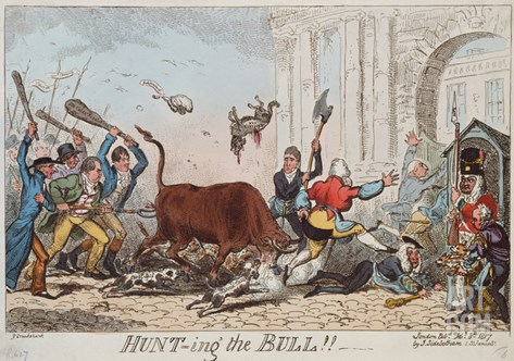 Hunting the Bull, 1817 (Colour Etching) Stretched Canvas Print