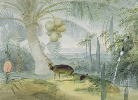 A Landscape in Ceylon, with Barking Deer and Fawn and a Pair of Paradise Fly-Catchers, C.1808-11 Stretched Canvas Print