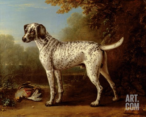Grey Spotted Hound, 1738 Stretched Canvas Print